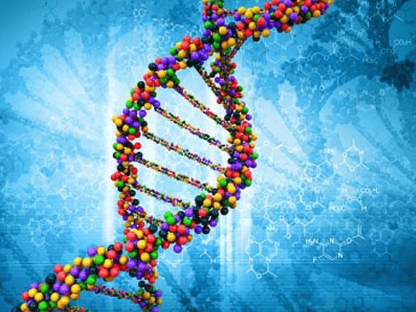 Hiện tượng Chimerism, gen chimera