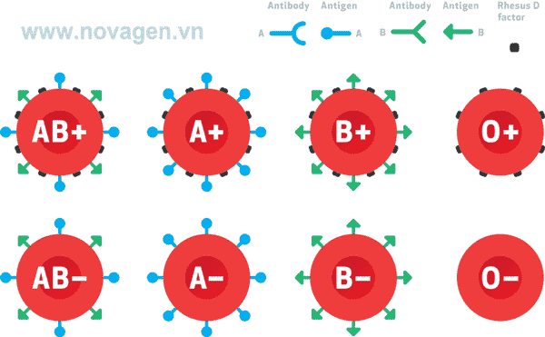 bảng phân loại các kiểu nhóm máu ABO