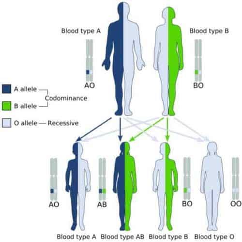 nhóm máu di truyền như thế nào