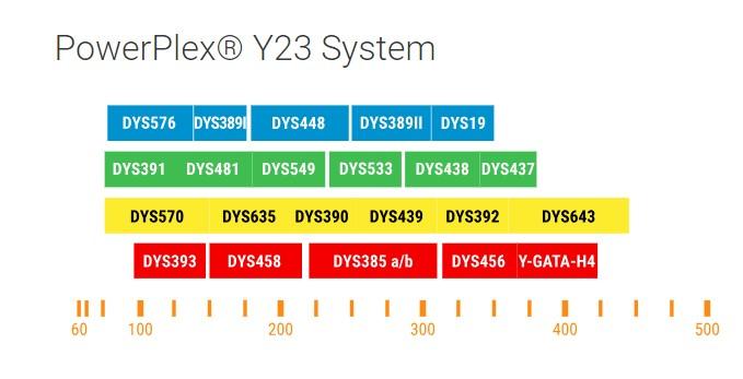 bộ kit PowerPlex Y23 System của Promega