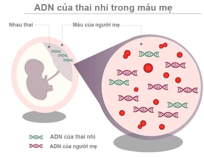 xét nghiệm adn thai nhi không xâm lấn